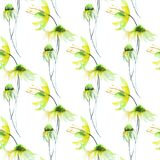 Seamless pattern with Gerber flowers. Watercolor illustration Stock Image