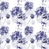 Seamless pattern with Gerber and Hydrangea flowers. Watercolor illustration Royalty Free Stock Images