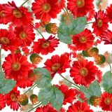 Seamless   floral pattern. Seamless   pattern of gerbera flowers . Endless texture for your design Royalty Free Stock Photography