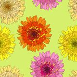 Seamless pattern with gerbers Royalty Free Stock Photos