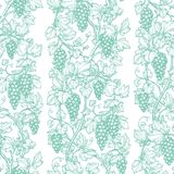 Seamless pattern with grape vine. Stock Image
