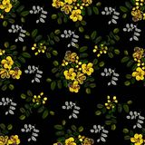 Seamless pattern,Graphic design, Cassia flower in abstract style on black background. For fabric.paper Stock Images