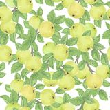 Seamless pattern with green apples Stock Photo