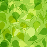 Seamless pattern with green birch leaves Stock Images