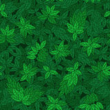 Seamless pattern with green branches of trees Stock Photos
