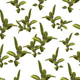 Seamless pattern, green bright Ficus Elastica leaves on white background. Vector illustration Royalty Free Stock Photo