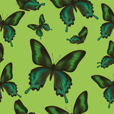 Seamless pattern with green butterflies Stock Photography