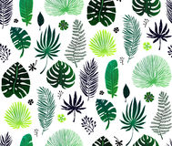 Seamless pattern with green exotic palm leaves on white background. Vector illustration. Stock Images