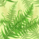 Seamless pattern with green fern leaves. Vector illustration of green fern leaves seamless pattern Stock Photo