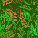 Seamless pattern with green and ginger acacia leaf on darc green background. Vector illustration acacia leaves royalty free illustration