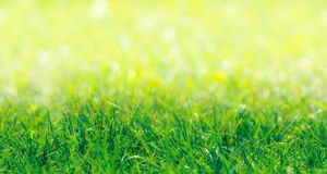 SEAMLESS PATTERN: Green Grass Border. With Defocused Natural Background at Sunny Summer Day Royalty Free Stock Images