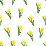 Seamless pattern. Green grass with small yellow narcissus flowers isolated on white. Vector illustration Stock Photos