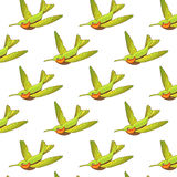 Seamless pattern with green Hummingbirds. Royalty Free Stock Photo