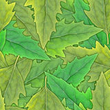 Seamless pattern of green leafs Stock Image