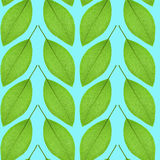 Seamless pattern of green leaves on a blue background Royalty Free Stock Photography
