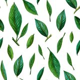 Seamless pattern of green leaves. citrus green leaves pattern on white background. Summer and juice background. painted stock illustration