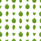 Seamless pattern of green leaves Stock Photos