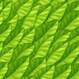 Seamless pattern from green leaves. Repeating vector pattern of lettuce leaves. Vegetarian theme. Pattern for background royalty free stock image