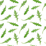 Seamless pattern with green leaves of rucola arugula. Vector hand drawn illustration. Stock Photography