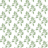 Seamless pattern green leaves of sandalwood Royalty Free Stock Image