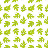 Seamless pattern with green leaves. Vector texture with fresh foliage. Stock Photo