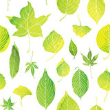 Seamless pattern of green leaves. By watercolor paint royalty free illustration