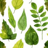 Seamless pattern with green leaves in watercolor Stock Photos