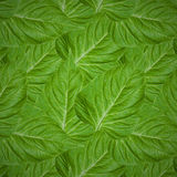 Seamless pattern of green leaves Royalty Free Stock Photo