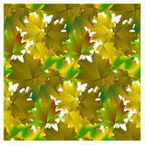 Seamless pattern green maple leaves Stock Photo