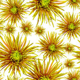 Seamless pattern green orange chrysanthemum Stock Photography