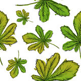 Seamless Pattern Of Green Palmate Leaves Watercolor Royalty Free Stock Photos
