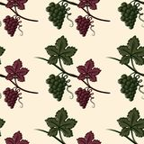 Seamless Pattern of Green and Red Grape. Vector illustration Royalty Free Stock Photos