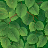Seamless pattern with green spring leaves Stock Photo