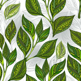 Seamless pattern with green tea leaves Stock Photography