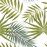 Seamless pattern of Green tropical leaves on white background. Summer wallpaper exotic palm trees. Seamless pattern of exotic palm trees. Green tropical leaves Royalty Free Stock Photography