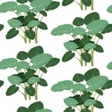 Seamless pattern green tropical plant vector illustration Stock Photography