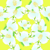 Seamless pattern - grid with jasmine on a yellow background vect Stock Photo