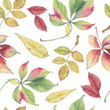 Seamless pattern with hand drawn autumn leaves. Stock Photos