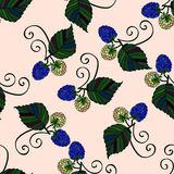Seamless pattern with hand drawn blackberries Stock Photography