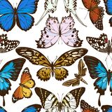 Seamless pattern with hand drawn colored papilio ulysses, morpho menelaus, graphium androcles, papilio demoleus