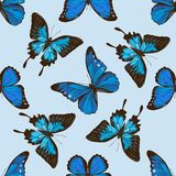Seamless pattern with hand drawn colored papilio ulysses, morpho menelaus, morpho rhetenor cacica