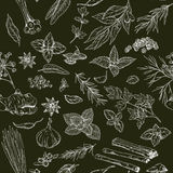 Seamless pattern with hand drawn culinary herbs and spices Stock Photography