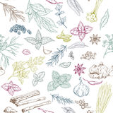 Seamless pattern with hand drawn culinary herbs and spices Stock Photos
