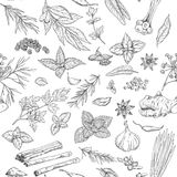 Seamless pattern with hand drawn culinary herbs and spices Stock Images