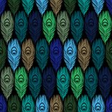 Seamless  pattern with hand drawn feathers peacock Stock Photography