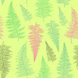 Seamless pattern with hand drawn fern leaves Royalty Free Stock Images