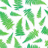 Seamless pattern with hand drawn fern leaves Royalty Free Stock Image