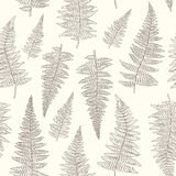 Seamless pattern with hand drawn fern leaves Stock Photos