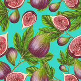 Seamless pattern of hand drawn figs Royalty Free Stock Image