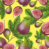 Seamless pattern of hand drawn figs Royalty Free Stock Images